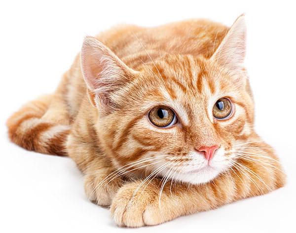 Imagen gato veterinario valladolid