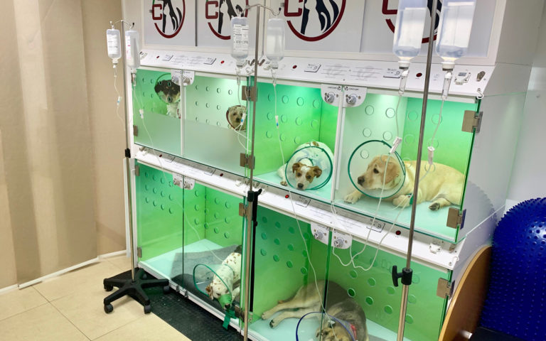 instalaciones clínica veterinaria castilla en valladolid